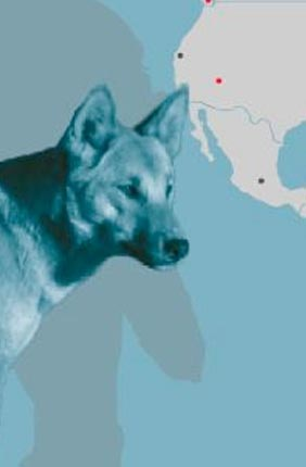 A new study analyzed DNA from ancient dog remains from more than a dozen sites in North and South America.
