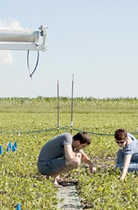 SoyFACE, the Soybean Free Air Concentration Enrichment project, at the University of Illinois.