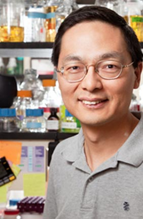 University of Illinois chemical and biomolecular engineering professor Huimin Zhao and his colleagues engineered a new detector of compounds that bind to estrogen receptors in human cells.