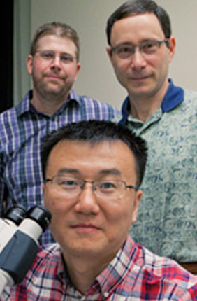 IGB Fellow Bo Wang (front) with Phil Newmark (right) and James Collins (left) are studying the unique mechanisms that allow schistosomes' germinal cells to create thousands of clonal larvae that can then infect humans.