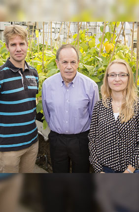 Stephen P. Long, a professor of crop sciences and of plant biology (center), with postdoctoral researchers Johannes Kromdijk, (left) and Katarzyna Glowacka, developed crops that use water 25 percent more efficiently by boosting the level of a protein.