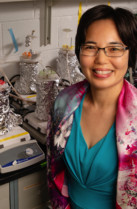 Civil and environmental engineering professor Helen Nguyen has found that water-softening additives may increase the risk of pathogen release into drinking water by weakening the grip that bacteria have on pipe interiors.