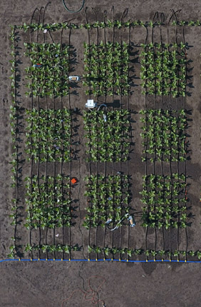 Breakthrough to measure plant improvements help farmers boost production