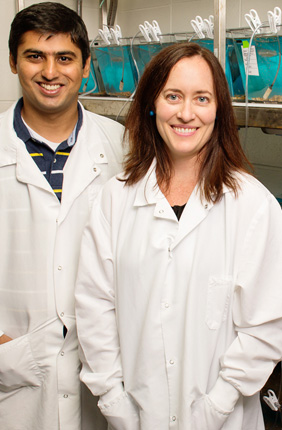 University of Illinois animal biology professor Alison Bell, graduate student Abbas Bukhari