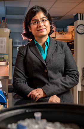 U. of I. postdoctoral researcher Preeti Sharma and her colleagues engineered a molecule that targets both human and mouse solid-tumor cancer cells.