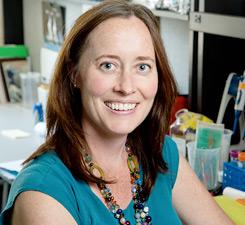 Gene Networks in Neural & Developmental Plasticity