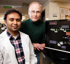 Linking Bacterial Infection to Cancer