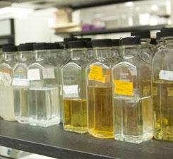 Fueling Bioenergy Discovery