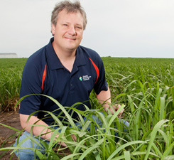 Mapping the Miscanthus Genome