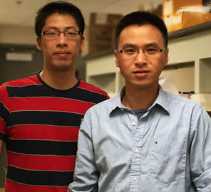 Assistant Professor of Bioengineering Ting Lu and colleagues have uncovered new insights into fermentation, opening new possibilities for advanced biofuel development.