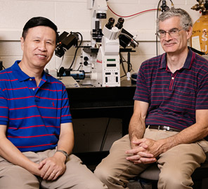 Ning Wang, Professor of Mechanical Science and Engineering and Andrew Belmont, Professor of Cell and Developmental Biology led a team that found the pathway by which physical forces drive gene expression in cells.
