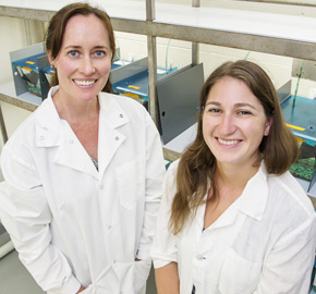 Animal biology professor Alison Bell and doctoral student Laura Stein study how stickleback fish dads influence the behavior of their young.