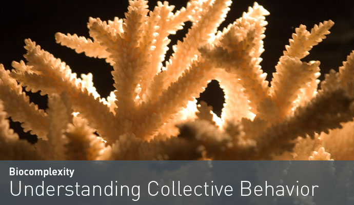 Understanding collective behavior