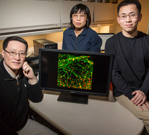 Fei Wang, with Qiuhao Qu, Jianjun Cheng, and colleagues, have improved the process of converting stem cells into motor neurons.