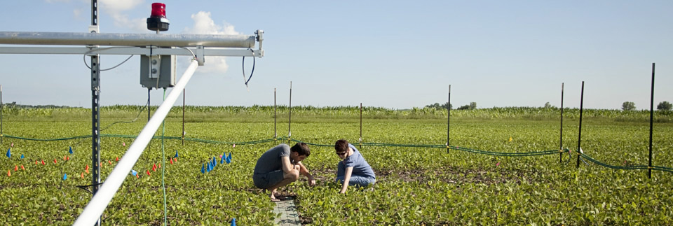 SoyFACE, the Soybean Free Air Concentration Enrichment project, at the University of Illinois