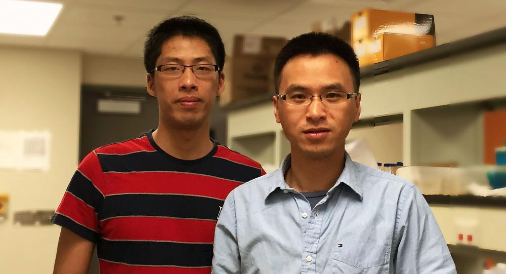 Bioengineerng graduate student Chen Liao (left), first author of the PNAS article, in the lab with Assistant Professor Ting Lu.