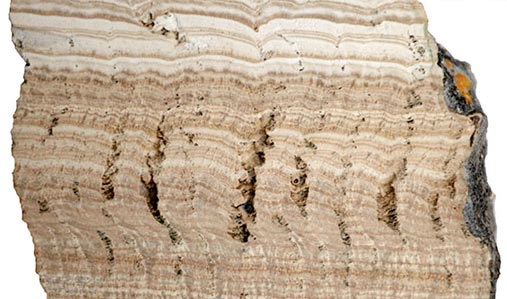 A cross-section of travertine, formed from limestone deposits in water flowing through the aqueduct.