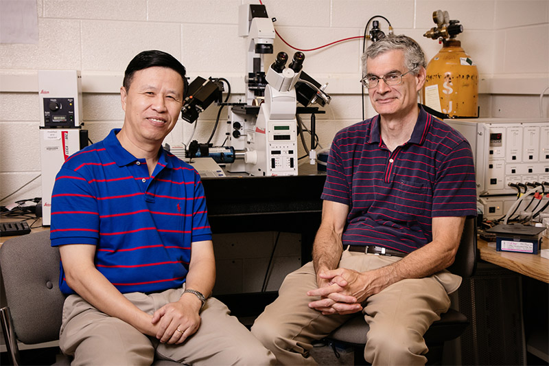 Professor of Mechanical Science and Engineering Ning Wang, left, with Professor of Cell and Developmental Biology Andrew Belmont, are exploring how mechanical signaling can be used for gene regulation or to identify targets for cancer therapies.