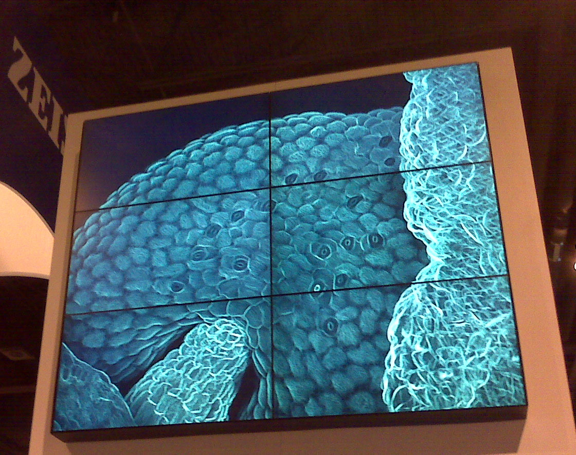 Four images from the Core were displayed at Cell Biology Conference
