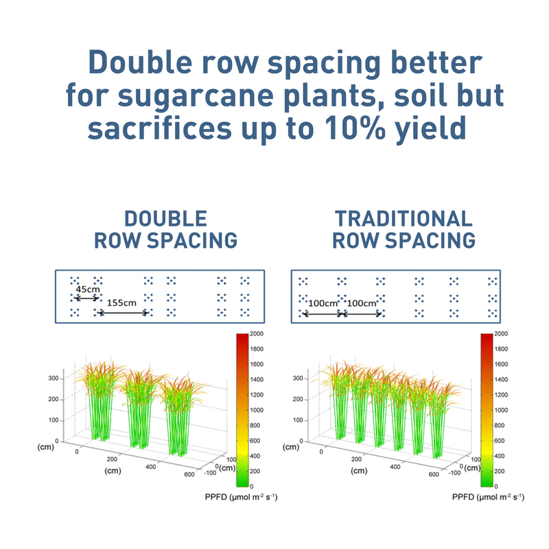 Double row spacing is better for sugarcane plants, soil but sacrifices up to 10% of yield.