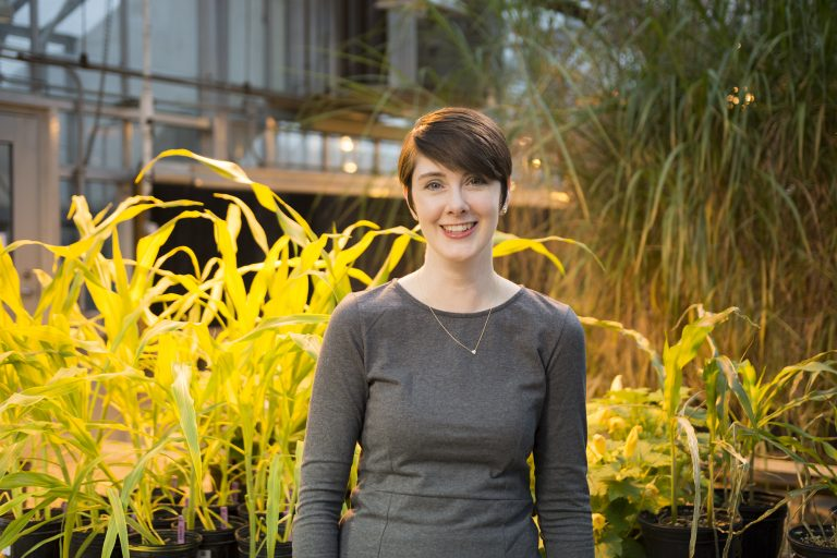 Over the next four years, Plant Biology Assistant Professor Amy Marshall-Colón will lead Crops in silico 2.0, a $5 million project funded by the Foundation for Food and Agriculture Research.
