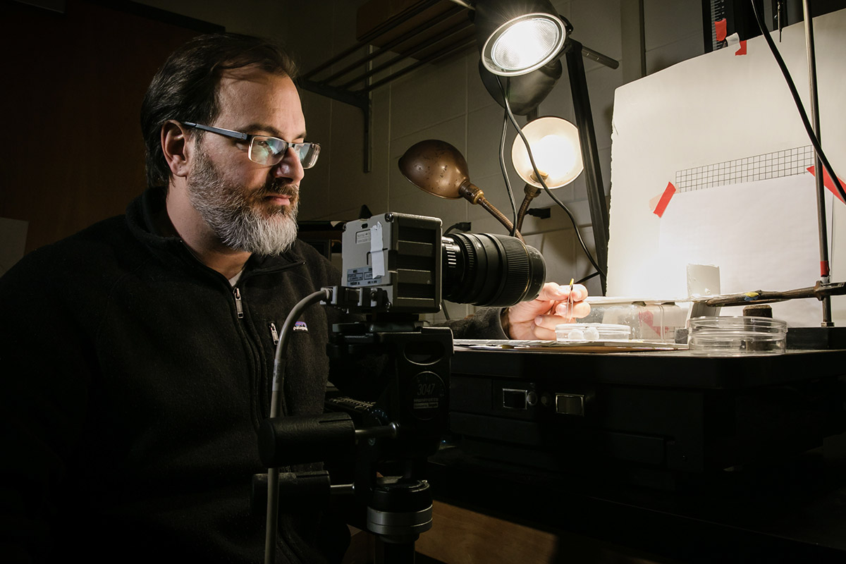 Entomology and animal biology professor Andrew Suarez and his colleagues studied the speed and mechanical characteristics of the Dracula ant.