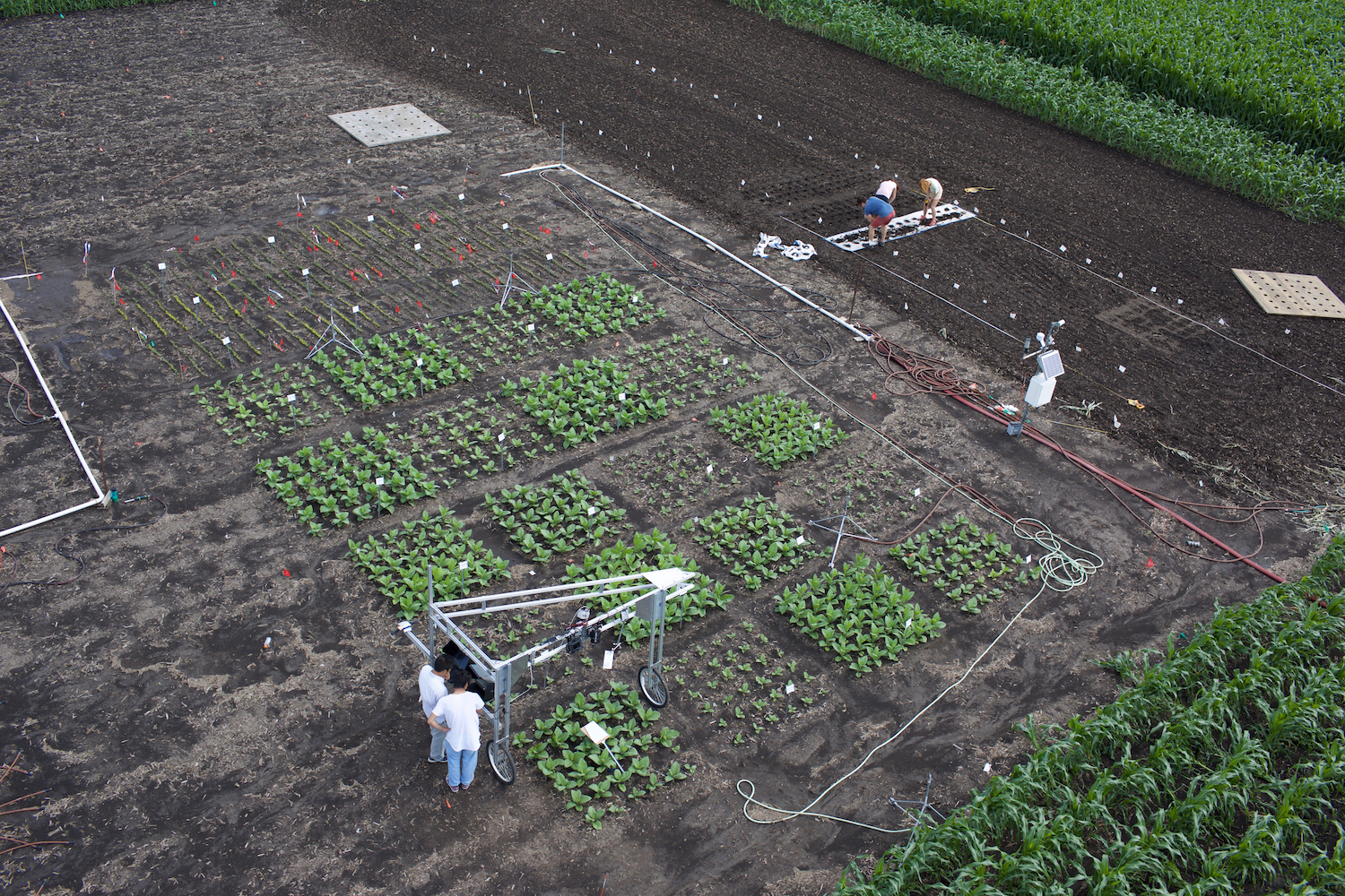 University of Illinois researchers using cameras to screen entire research plots for the top-performing plant traits.