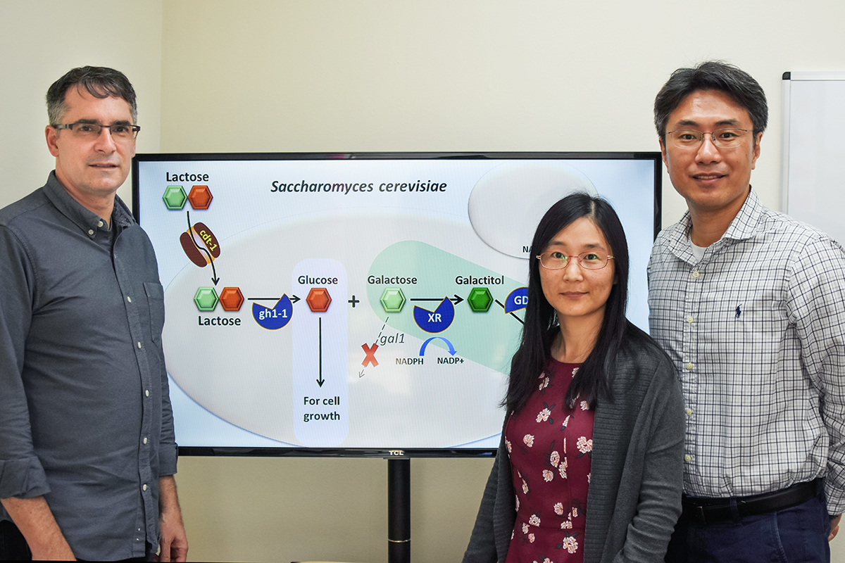 The researchers added genes that direct the yeast's own metabolism to produce tagatose. Pictured, from left: University of California, Berkeley professor Jamie Cate, Illinois postdoctoral researcher Jingjing Liu and professor Yong-Su Jin.