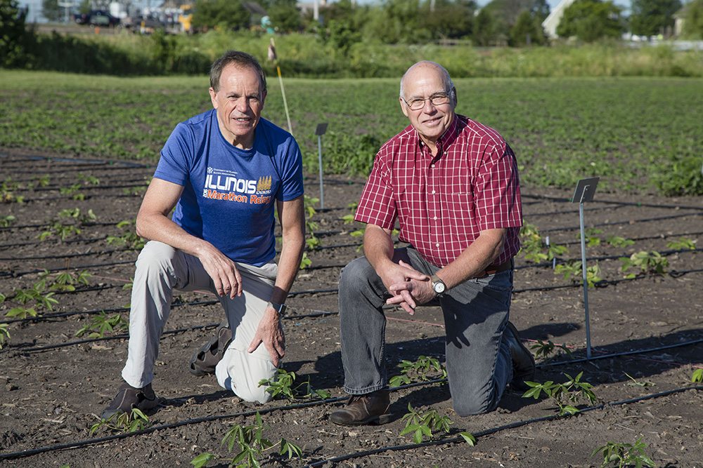 Researchers led by Stephen Long (left) and Don Ort (right) will continue transformative work to increase yields of food crops for farmers worldwide through Realizing Increased Photosynthetic Efficiency with the support of a five–year, $45-million reinvestment from the Bill & Melinda Gates Foundation , the Foundation for Food and Agriculture Research, and the U.K. Department for International Development.