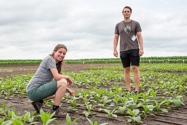 Patricia Lopez-Calcagno (left) and Kenny Brown (right) evaluate a field trial that helped prove that increasing a protein in the leaves of crops can increase production by nearly 50 percent.