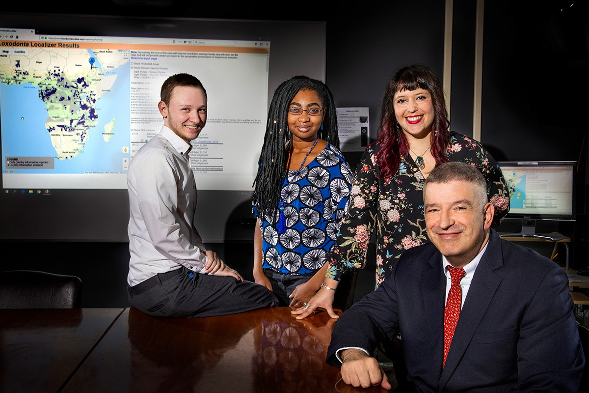 With their colleagues, U. of I. animal sciences professor Alfred Roca, seated, with, from left, technician Cory Green and graduate students Tolu Perrin-Stowe and Alida de Flamingh, developed an online tool that can trace the origins of poached ivory more quickly than previous methods.