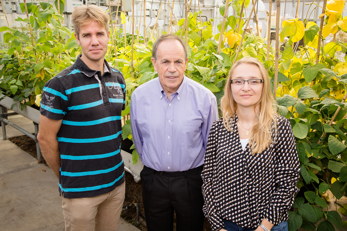 From left to right: Scientists Johannes Kromdijk, Stephen Long, and Katarzyna Glowacka improved a model used to make crop predictions by incorporating how microscopic, mouth-like pores on leaves may open in response to light