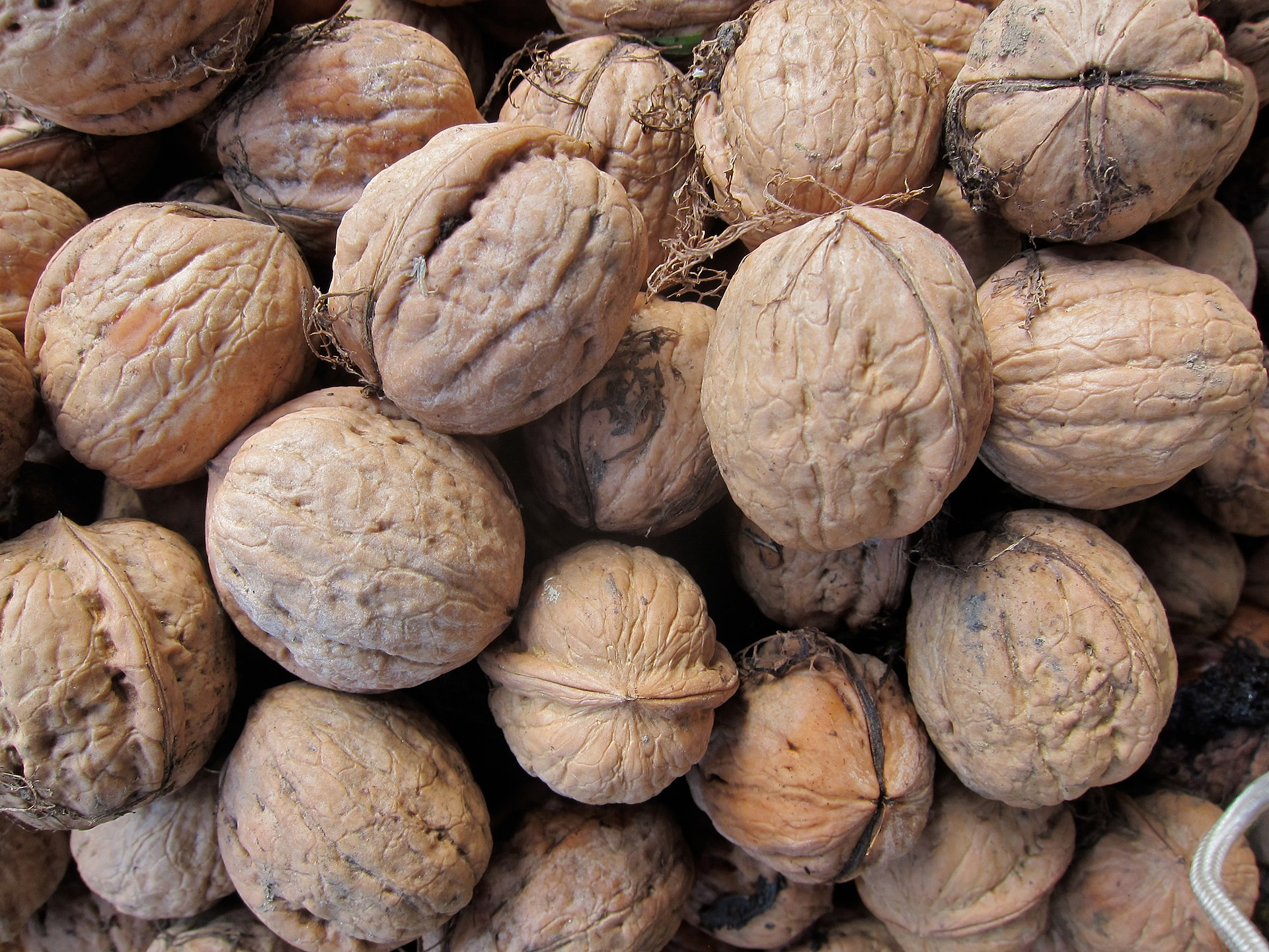 Previous research that prompted this microbial research showed that the amount of energy (calories) derived from walnuts after we eat them is less than previously though